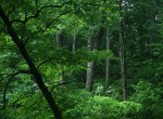 forest_522767576_a184fc51f5