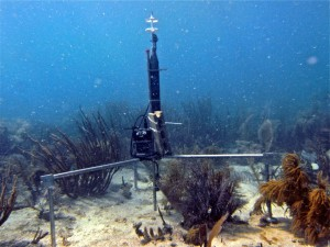 coral instrument