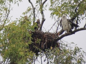 We spotted an eagles nest as we sailed down the channel to Hiron Point.