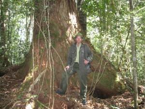 viet-tree-300x225