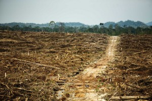 A Cargill palm oil plantation in West Kalimantan, Indonesia. Photo: Rainforest Action Network