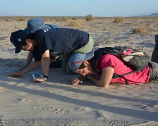 While Death Valley's  Mesquite Flat Dunes are popular with tourists, Christie-Blick prefers to take his students to a set of smaller, less-traveled dunes nearby. Here, Meara Hayden (right), Tina Liu and Xin Xu examine variations in sand grain size associated with wind ripples.