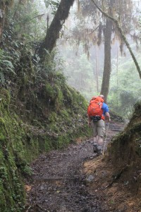 The trail leading up to Mount Chirripó around 8,000 feet is densely vegetated and humid.