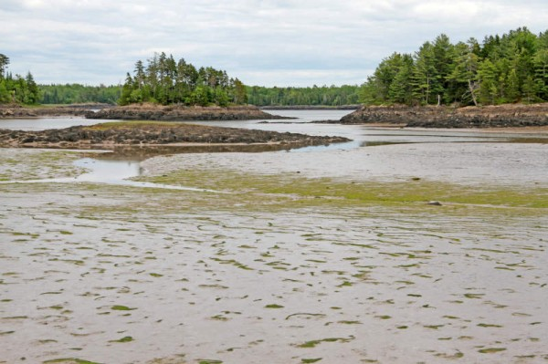 Cobscook Bay State Park, Maine. Photo: W. Menke