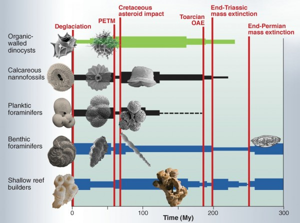 carbon fossil history