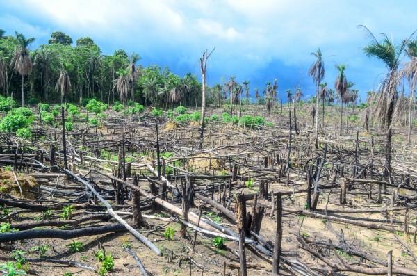 Deforestation in Sierra Leone. Photo: jbdodane