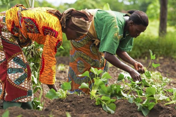Farmers in Tanzania. Photo: Gates Foundation