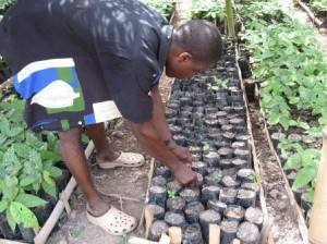 MVP, agriculture, Ghana