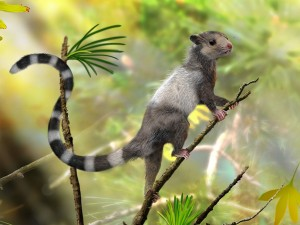 An artist's illustration of the tree-dwelling mammal Xianshou songae (by Zhao Chuang). The discovery of three new Jurassic species suggests that mammals evolved earlier and diversified more rapidly thank previously thought.