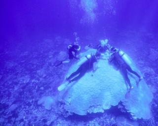 corals-linsley