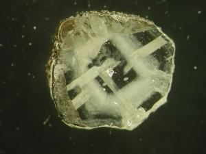 The diamonds most useful to geochemists are the least commercially valuable, containing chemical impurities. This one, from northern Canada, contains inclusions of coesite (a form of quartz) and tiny bubbles of fluid. The rough outer coating probably also contains items of interest. (Courtesy Yaakov Weiss)