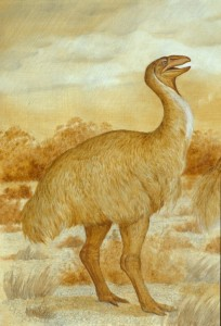 "Genyornis newtoni, one of the great ""thunder birds"" of Australia, went extinct about 50 thousand years ago, for reasons that are still not clear. Image: Ann Musser @ Australian Museum."