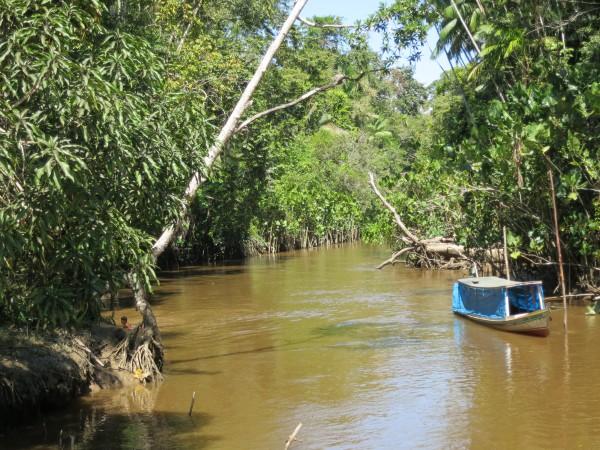 Amazon, deforestation, climate change