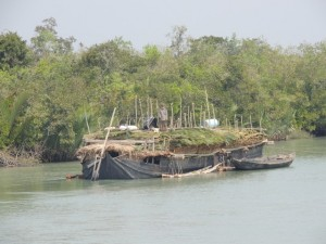 A boat harvests leaves for thatching roofs in the Sundarbans.