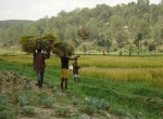 Rugera Migozi Rice Scheme