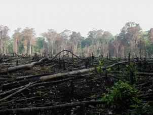 Deforestation in southern Mexico