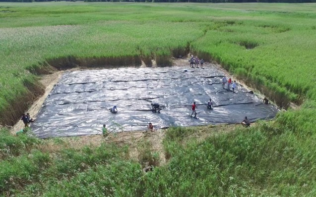 Piermont Marsh, along the Hudson River, has been overtaken by an invasive reed species called phragmites. Students in our high school field work program spent the summer studying the marsh and testing non-chemical methods to restore its native diversity.