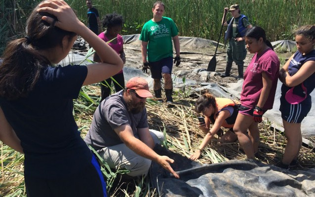 David Decker shows the team a section of Constitution Marsh that had been covered to kill the invasive reeds. Once phragmites are gone from an area, natural species grow back in, creating a more diverse, healthier wetland.