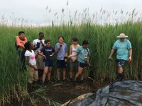 Back at Piermont Marsh, the students make it through the mud to a small test plot with East Harlem teacher Andrew Mittiga. Right to left: Alondra Cruz, Anjelle Martinez, Keylen Lucero, Raquel Penalo, Nick Mapp, Marc Jimenez and Shanon Dempster.