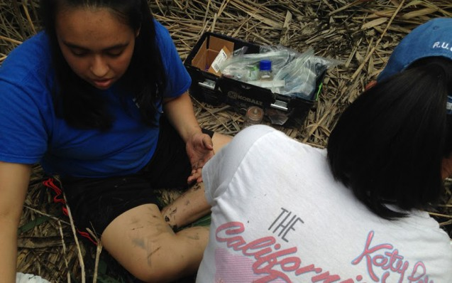 On a flattened section of marsh, Laisa Sevilla samples the soil and plant matter for carbon and methane content.