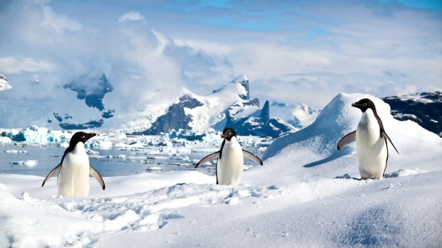 Adelie Penguins, Antarctica. Photo credit: ravas51/Flickr.