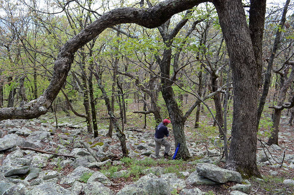 Drier upland sites like this one in western Arkansas host different communities, including the oaks that predominate here. Rocky terrain like this is also a great place to encounter rattlesnakes.