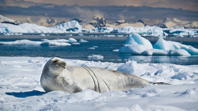 Antarctica S Wildlife In A Changing Climate