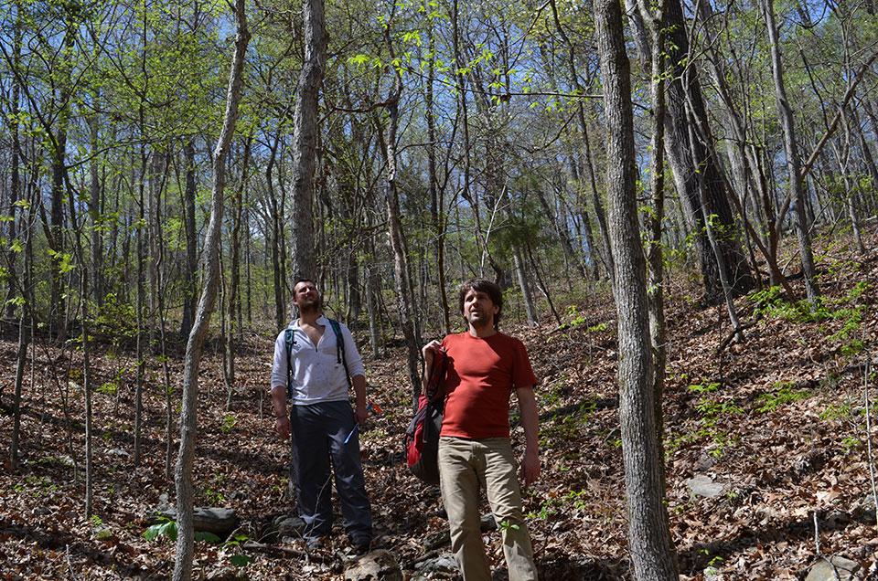 In the woods of southern Missouri, Pederson and Lamont bioclimatologist Park Williams (left) explore for big old trees. At one point they hear the cry of a pileated woodpecker—a sign they are on the right track.