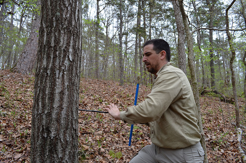 Coring a tree takes muscle and persistence. The team does dozens of them a day. Here, Lamont Tree Ring Lab technician Javier Martin Fernandez works on a red oak.