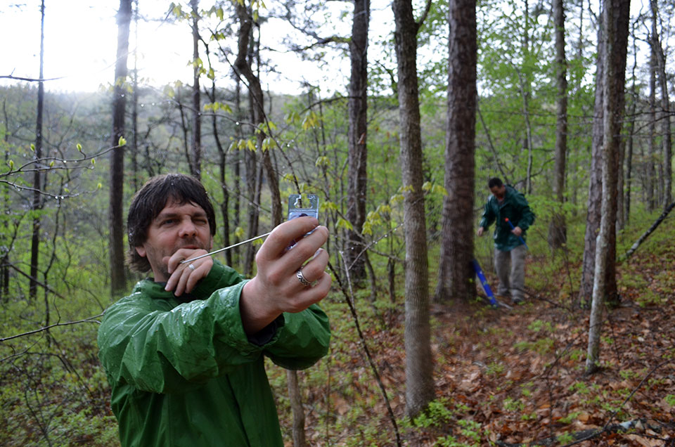 In a soaking rain, Pederson eyeballs a plot through an angle gauge, a forester's tool for estimating forest density and species composition.