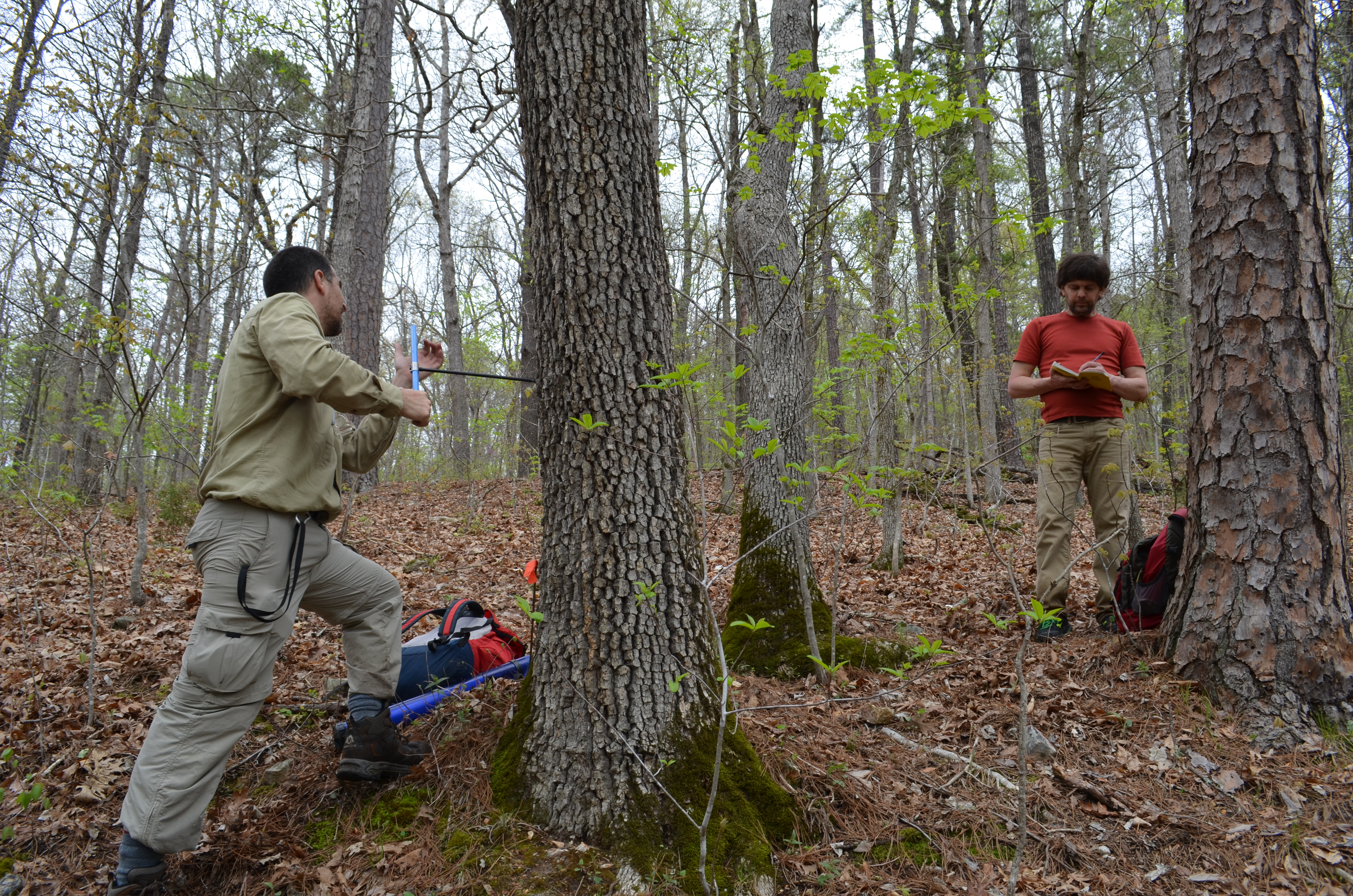 Technician Javier Martin Fernandez drills into a tree in order to sample a cross-section of its rings. Tree-ring scientists Neil Pederson, a Lamont adjunct based at Harvard Forest, notes position, surrounding trees and other data.