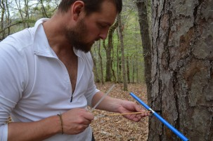 Bioclimatologist A. Park Williams extracts a core from a shortleaf pine; the size and density of rings will tell him how the tree has reacted to past weather swings.