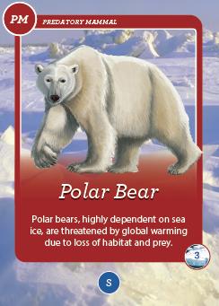 card polar bear