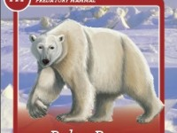 card polar bear thumbnail
