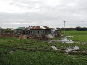 House in the middle of the wet fields. During the summer monsoon, it will be an island connected by the bamboo bridge.  In a month it will be connected by dry land