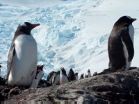 Penguins in West Antarctica