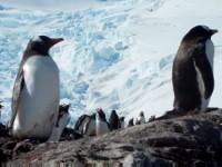 Penguins in West Antarctica