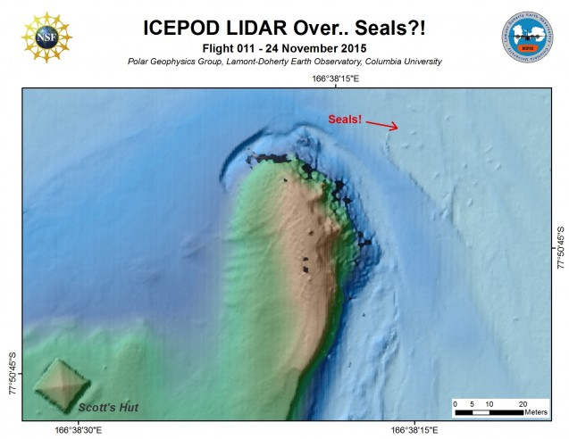 Yes those are seals! Weddell seals lying on the  ice and imaged by the LiDAR. (Processed by S. Starke)