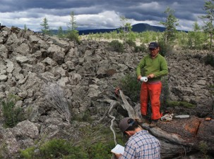 Researchers take samples from a fallen tree in Mongolia. Credit: Neil Pederson.