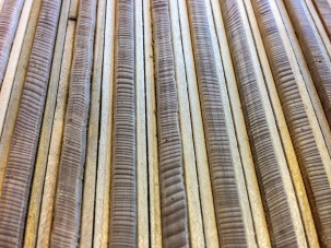 Polished, narrow cores in the Tree Ring Lab at Lamont-Doherty Earth Observatory.