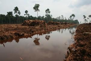 Deforestation in Indonesia Photo: Rainforest Action Network