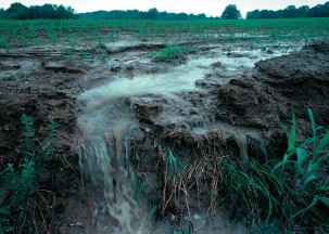 Fertilizer runoff causes nitrogen pollution