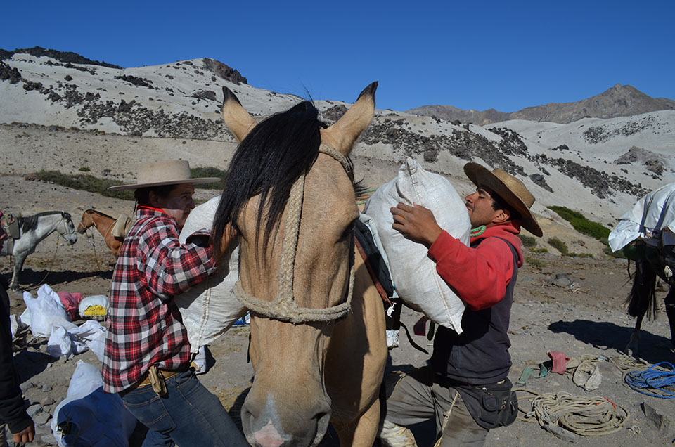 Luis Riquelme (left) and  Roberto Aránguiz perform the daily morning chore of loading up the horses. The animals were amazingly strong, surefooted and patient.
