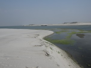 Natural coastal features like wetlands and sand dunes may be able to adjust somewhat to sea-level rise. (Kevin Krajick)
