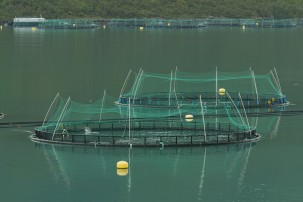 Aquaculture in Norway Photo: Ximonic