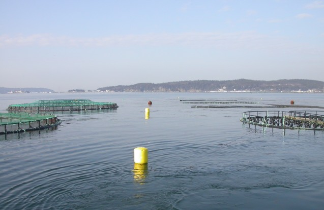 An Integrated Multi-Trophic Aquaculture site at Cooke Aquaculture Inc. in the Bay of Fundy, Canada: salmon cages (left), mussel raft (right foreground) and seaweed raft (right background). Photo: Thierry Chopin