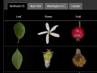 The Leafsnap app helps users identify trees from photographs of leaves—an example of a growing number of science and environment-related apps.