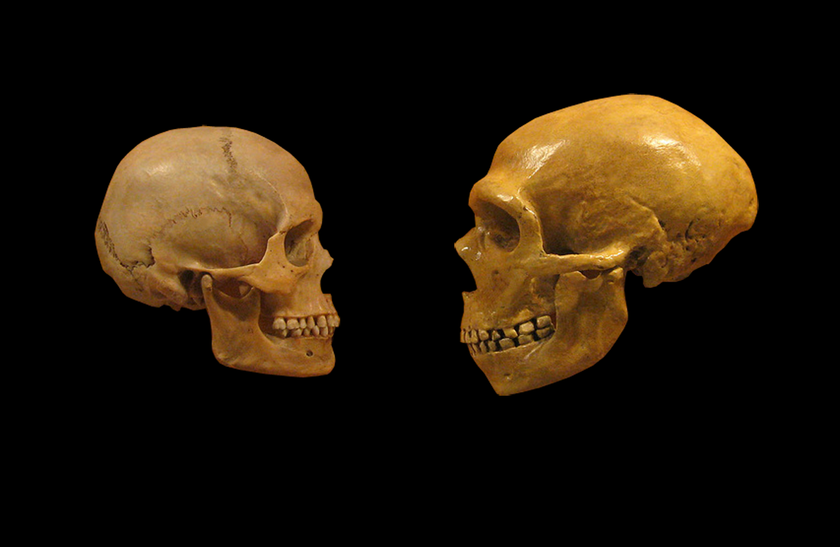 The 2 Million Year Melee Neanderthals Vs Humans