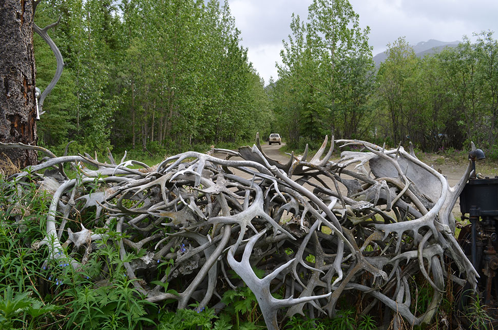 As human influence grows here, scientists hope to better predict how the environment will affect plants, trees, animals, people. A Wiseman fence made of caribou and moose antlers speaks to the powerful intertwining of man and nature in this region.