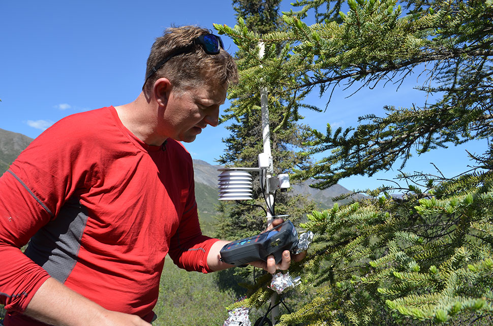 Remote-sensing specialist Lee Vierling of the University of Idaho takes fluorescence readings from spruce needles. Instruments behind him  automatically record temperature, wind speed, air pressure and humidity.